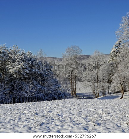 Beautiful winter landscape with snow.