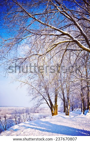 beautiful winter view  on snow-covered park instagram stile