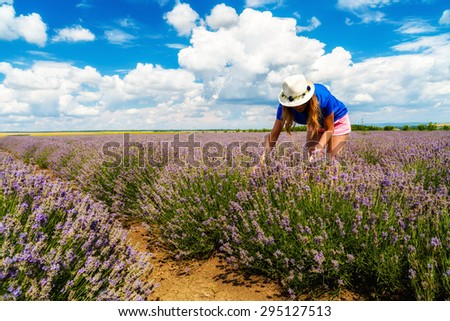 Beautiful  woman harvesting lavender on field