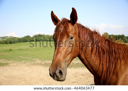 Beautiful young horse posing on summer meadow
