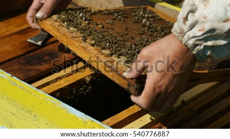 Beekeeper showing the honeycomb in the frame