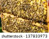 Bees on honeycomb in beehive working and collecting pollen and honey - stock photo