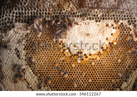 Bees swarming on a honeycomb stilllife