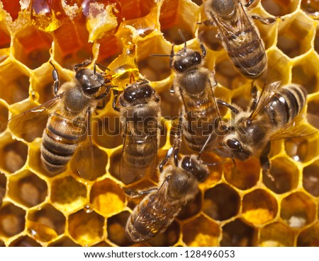 Bees take honey from the resulting drop.