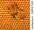 bees work on honeycomb - stock photo