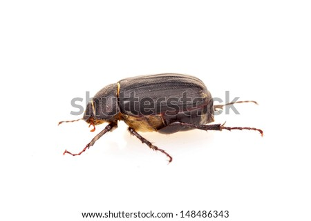 Beetle on a white background, close-up images