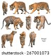 bengal tiger isolated on white background - stock photo