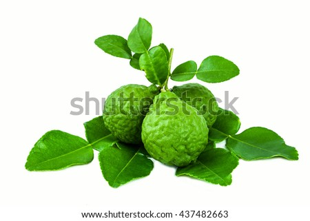 Bergamot is a fragrant herb.
