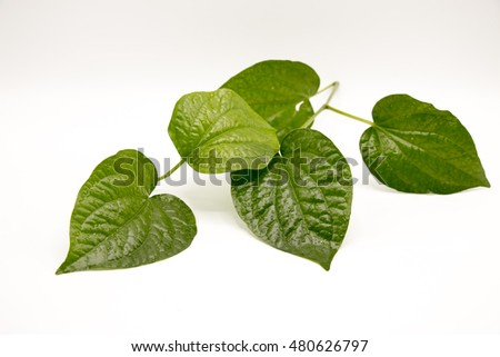 betel leaf on white background