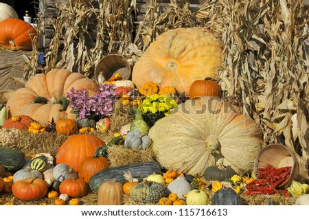 Big assortment of decorative pumpkins and flowers