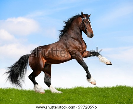 Big bay horse in field