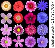 Big Selection of Colorful Flowers Isolated on Black Background. Various Red, Pink, Purple, White Colors including rose, dahlia, marigold, zinnia, strawflower, sunflower, daisy, primrose - stock photo
