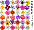 Big Selection of Various Flowers Isolated on White Background - stock photo