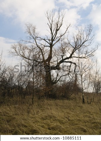 Big tree on the field in winter on poland. Blue sky and white clouds.