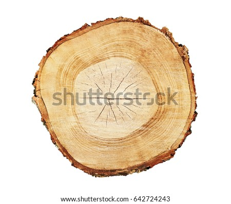 Set tree rings saw cut tree stock vector 257045035 for Large tree trunk slices