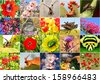 Biodiversity collage with all non-agricultural value plants or insects, but important for ecological balance (all images belong to me) - stock photo
