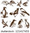 bird - stock