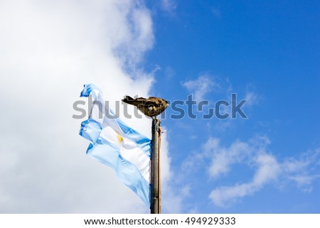 Bird landed on Argentina's flag