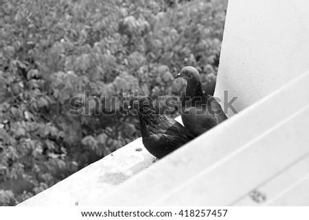 Winter Beauty Stock Photo 588049691 Shutterstock