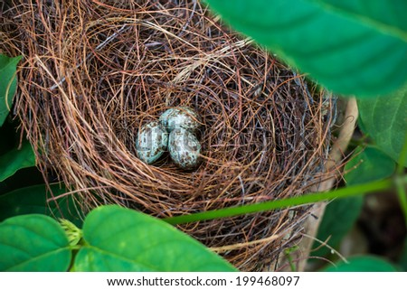 Bird nest and eggs on tree