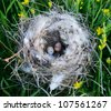 Bird nest with eggs - stock