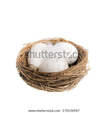 Bird nest with eggs isolated on white / Nesting / Nest eggs and feather isolated