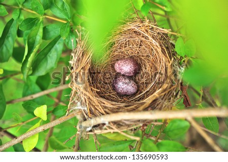 Bird Nest With Two Eggs
