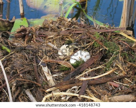 Bird nest with two small eggs in nature