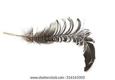 bird's feather on a white background