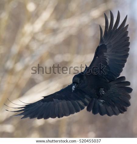 Scary Bird Flying