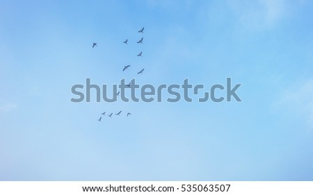 Birds flying in a blue foggy sky in winter