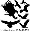 Birds of prey (eagle, hawk, falcon, griffon vulture etc.) silhouettes. Raster version. - stock photo