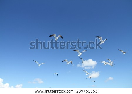 Birds: pack of sea seagulls against the blue sky and white clouds