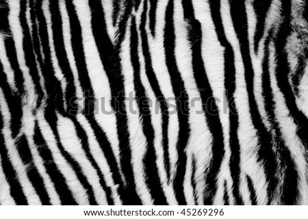 Black and White Animal Fur Background
