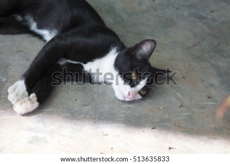 Black White Cat Sitting Outside Stock Photo 196866656 ...