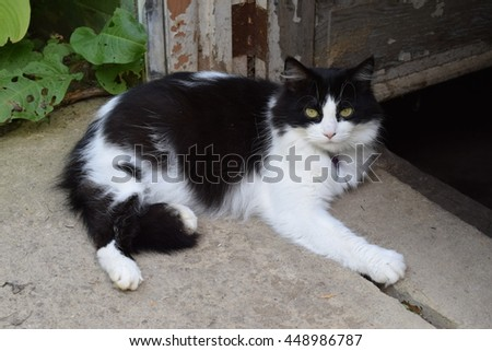 Black and white farm cat lounging at a doorway.
