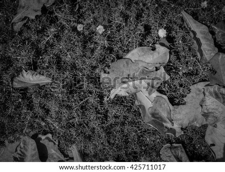 black and white of leaves on ground