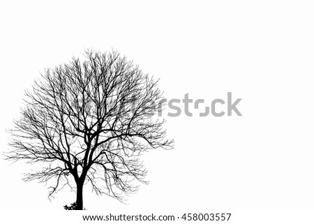 black and white of tree