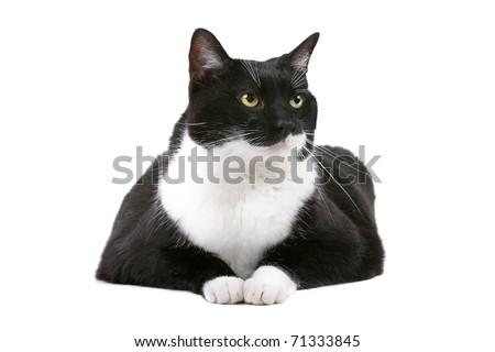 cat wet cough