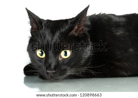 Black cat isolated on white
