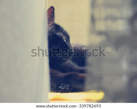 Black cat lying on a window