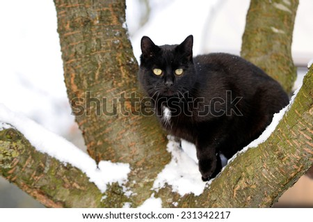 Black cat on tree in snow