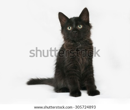 Black fluffy kitten sits on gray background