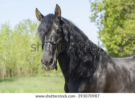 Black Horse Laughing