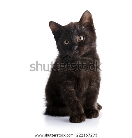 Black small kitten.  Fluffy black kitten. Kitten on a white background. Small predator. Black kitty. Small cat.