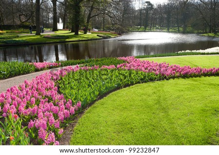 blooming flowers in a park with a pond