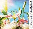 blooming lilies and peonies on a background of blue sky. Focus on the lily bud. - stock photo