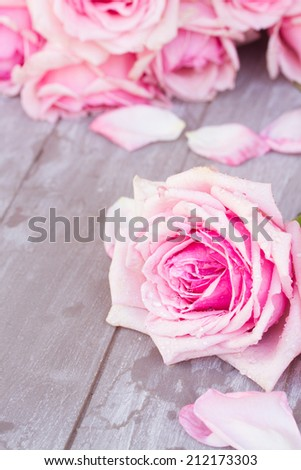 blooming pink  roses with petals  laying  on wooden  table