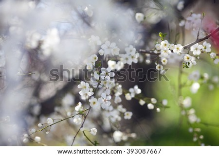 Blooming tree branches with flowers in springtime