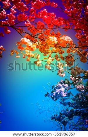 Blooming tree in springtime against blue sky with white clouds. Garden park scene with trees in spring, perfect for gardening blogs, website template, outdoor magazine. Image with rainbow color filter